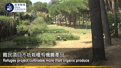 難民項目不祇栽種有機農產品