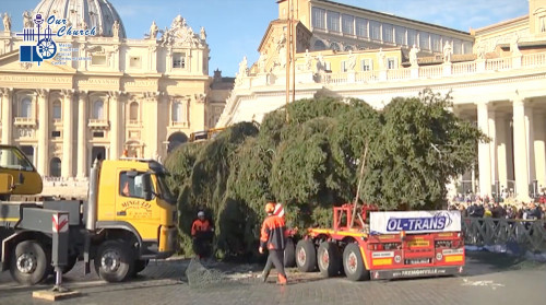 Vatican Christmas Tree arrives in St Peter's Square